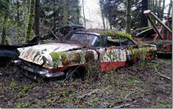 Cemitério de carros na floresta (7)