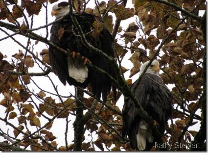 Grumpy Eagles