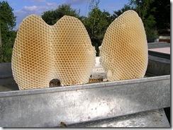 včelky a med květen 156