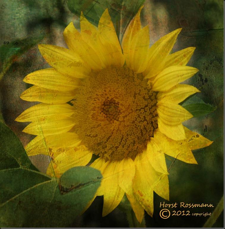 Sunny Sunflower w Texture copy