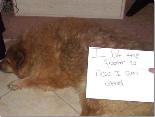 dog-shaming-bad-7