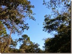 Golden Orb Weaver with Blue Sky