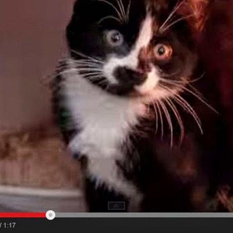 Γατάκι μέσα σε φούρνο μικροκυμάτων