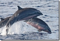 Dolphin watching in Bohol