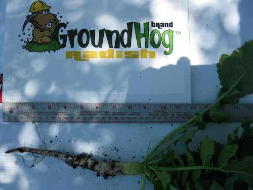 GroundHog™ only one month after planting!