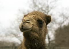 Camel Exotic Game Park Spring 2