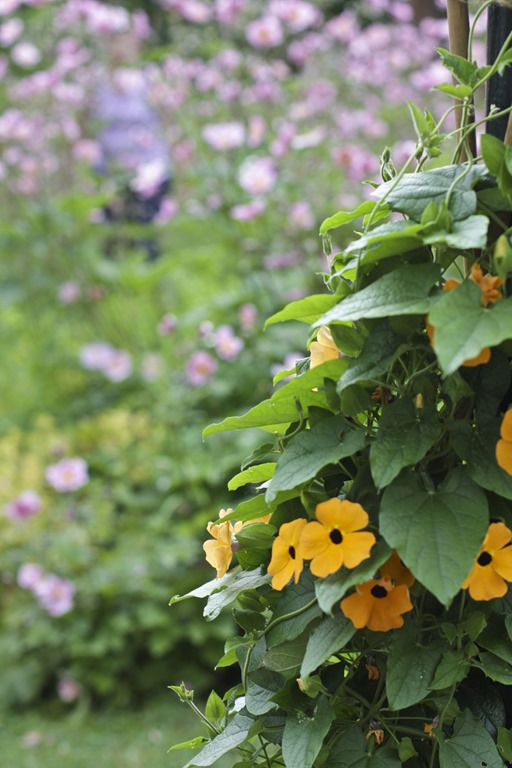 Gul blomst2B