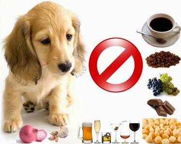 Alimentos-que-fazem-mal-para-cães