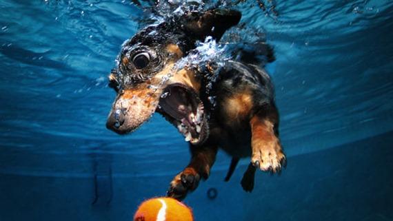 Underwater Dog 010