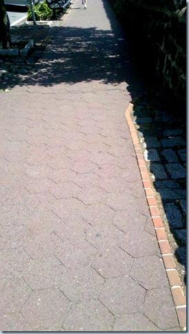 Sunny Sidewalks_11-23-23_519
