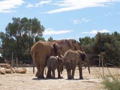 2005.08.28-017 éléphants