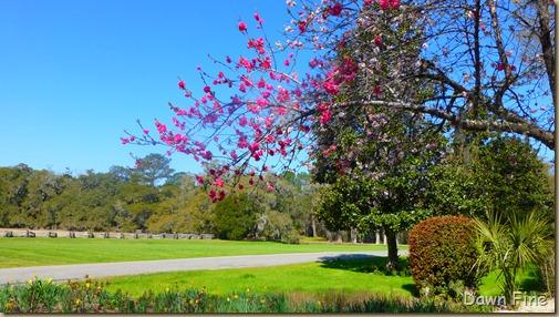 Magnolia Plantation_010