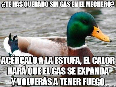 consejos del pato (10)
