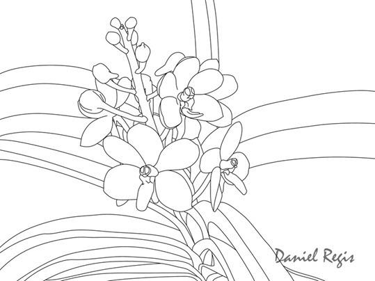 Ascocentrum curvifolium traços