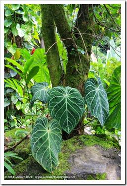 140726_HawaiiTropicalBotanicalGarden_0071