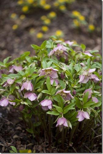 macro flowers30