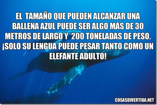 ballena azul 5