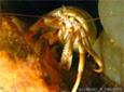 Manche Atlantique herbier des zoostères bernard l'ermite