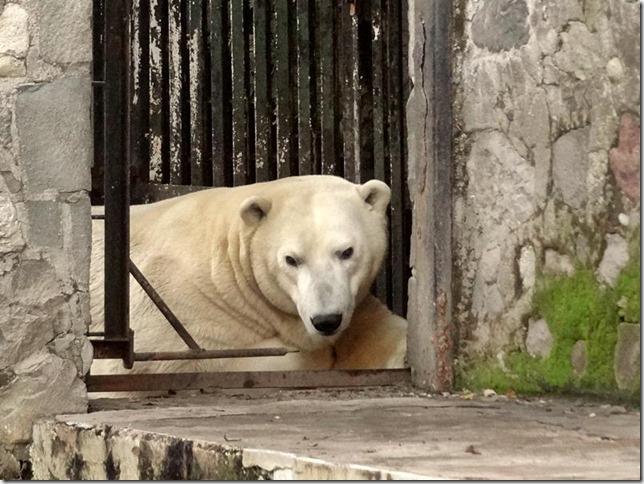 Santiago_Zoo_DSC03628