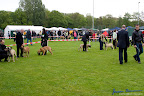 20100513-Bullmastiff-Clubmatch_30881.jpg
