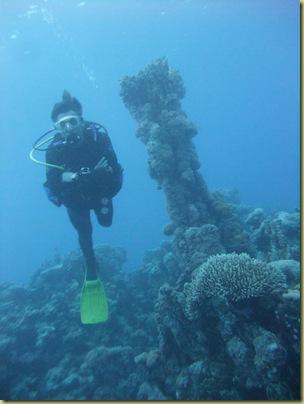 MR Pipe Coral-002
