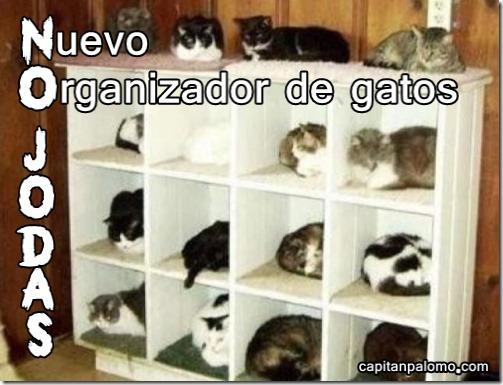 organizador de gatos