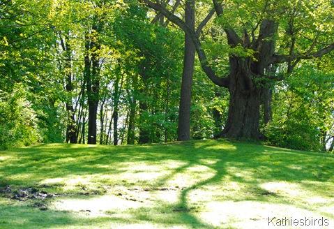 10. ghost tree-kab