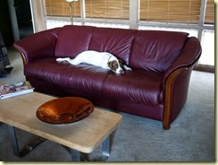 Zoe likes the Ekornes sofa