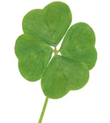 4-leaf clover on white background