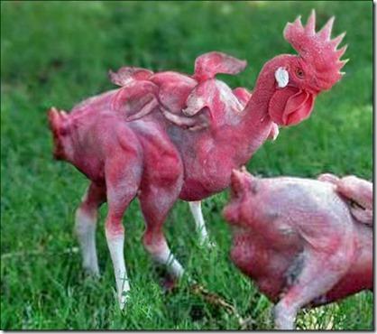mutant-chicken