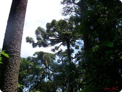 Parque Provincial Araucaria en San Pedro3