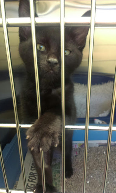 Black kitten in a cage