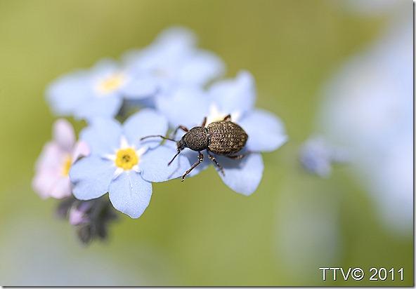 ötököitä kukkia 066