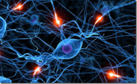 kerja sistem saraf