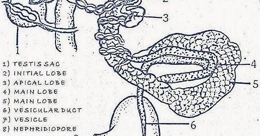Vertebrates comparative anatomy function evolution
