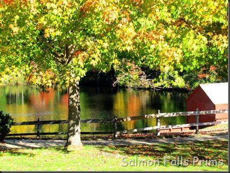 fall pic