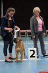 20130511-BMCN-Bullmastiff-Championship-Clubmatch-2400.jpg