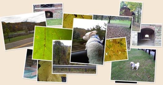 View Life of Georgie  A Trip to the Dog Park