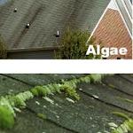Web_Roof_Algae_Moss_Lichen_1.jpg