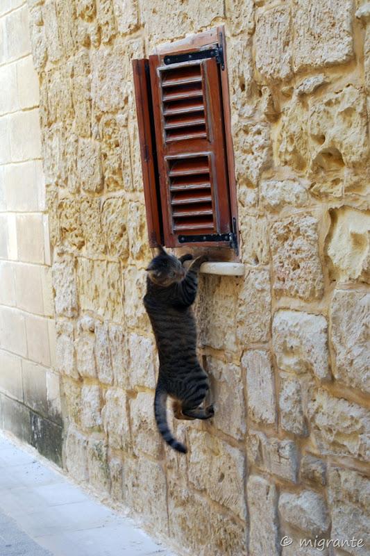gato sin botas - sagunto - españa