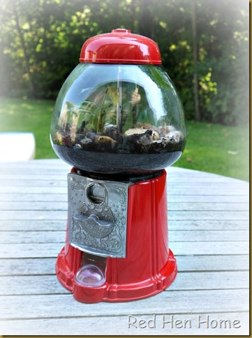 Red Hen Home Gumball Terrarium 11
