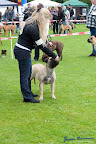 20100513-Bullmastiff-Clubmatch_30906.jpg