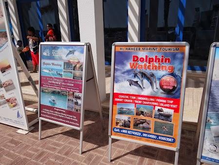 15. Oferte turistice in Muscat Marina.JPG