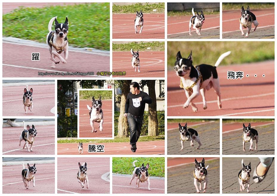 dog-fly05.jpg