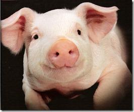 prod_nur_cute-pig-portrait_-bp0304-p-71