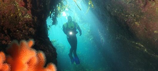 diving_norway_740x334