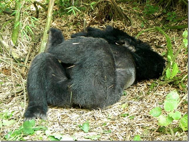 Rwanda_Gorillas (7)
