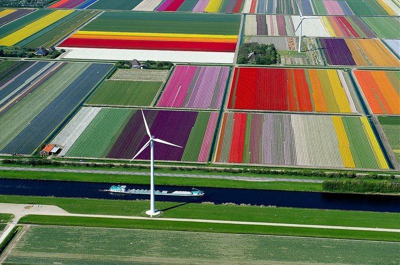 tulip-field-2