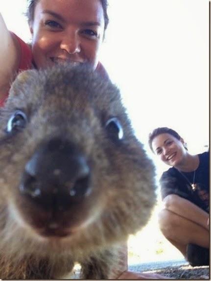 selfies-australian-quokka-011