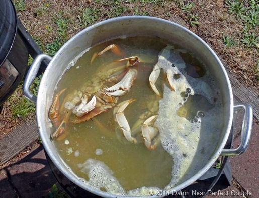 Crabs in Pot